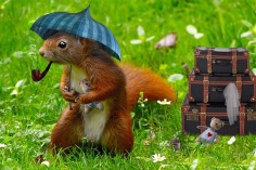 squirrel-with-umbrella-1